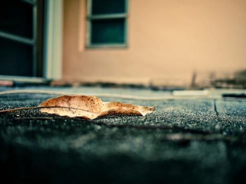 Olympus E-PL1, Street Photography
