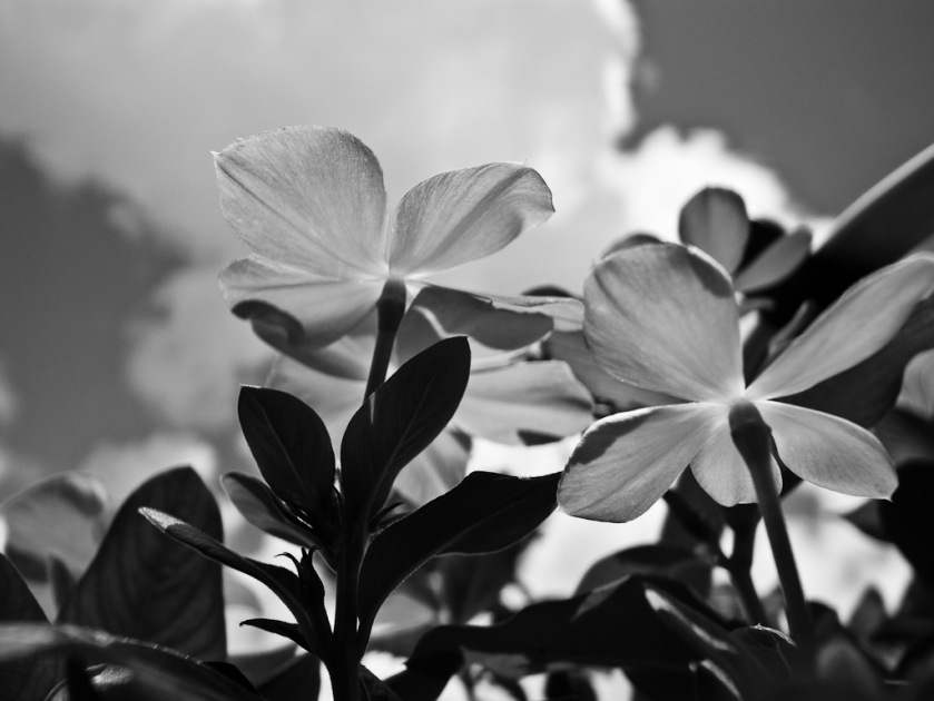 Ricoh GRD, GRD3, Street photography, black and white photography, daido, moriyama